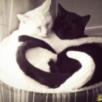 black-and-white-cats-tails-heart-shape-love