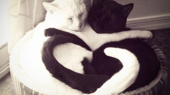 schware und weiße Katze eng umschlungen