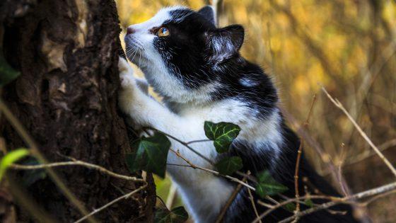 Katze im Baum