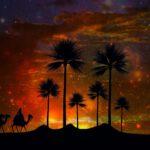 Silhouette drei Kamele und Palmen im Sonnenuntergang
